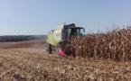 La bonne récolte de maïs n'efface pas  les inquiétudes