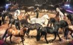Le panache des chevaux d'Alexis Gruss au Jumping de Bordeaux
