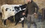 La vache bordelaise obtient le second prix de l'agrobiodiversité