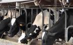 """Producteurs de lait:  victoire ou """"mascarade""""?"""