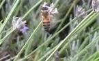 La Nouvelle-Aquitaine lance un plan abeilles