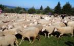 Une journée avec le troupeau  dans le Vercors