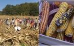 Bio d'Aquitaine fête la biodiversité des semences dans les Landes