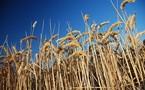 Boom du revenu, nouveau président à la FNSEA: 2010 l'année  des surprises agricoles