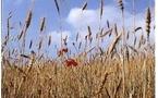 Le boom du bio: Aquitaine et Midi-Pyrénées en tête