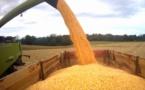 Comment l'Union Européenne néglige sa production de maïs
