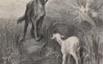Le Limousin se prépare à vivre avec le loup