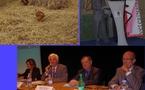 Les farines animales reviendront-elles dans les mangeoires?