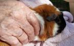 Portes ouvertes sur la médiation animale à Pompignac (33)