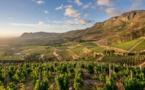 Le vin de Constance passera par Bordeaux