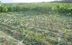 Un  ras-le-bol d'agriculteurs contre les faucheurs volontaires