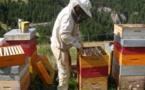 MIEL: Les apiculteurs réclament la vérité des étiquettes