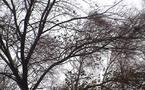 Et voici le vent cornant décembre