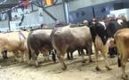 Le Salon de l'Agriculture de Nouvelle-Aquitaine fait peau neuve