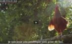 Loué, Fermiers du Sud-Ouest: la volaille à l'heure de la com