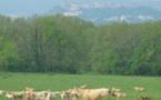 CRISE:la Coordination Rurale de Lot-et-Garonne alerte le Ministre