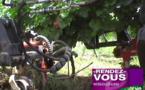Comment entretenir sa vigne en bio?(vidéo)