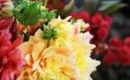 La plateforme Sessile au secours des artisans fleuristes