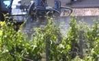 En Aquitaine  il faut 14 traitements par saison pour avoir  du beau raisin