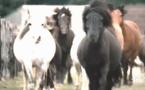 """Opération """"Tous à cheval"""" de la FFE"""