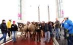 Les  éleveurs sur le pont