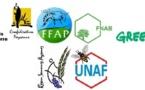 Tollé écologiste contre le retour du maïs génétiquement modifié
