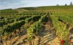 """PLU de Preignac: comment l'urbanisation  """"mange"""" la terre viticole"""