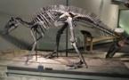 Bientôt des dinosaures en réalité augmentée au zoo de Pessac (Gironde)