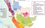 Interprofession des vins de Bordeaux: l'impact  d'une récolte déficitaire