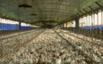 OGM, élevage en batterie:les Français veulent savoir selon France Nature Environnement