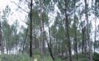 Le prix des forêts résiste à la crise