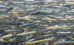 Les conserveurs redoutent une pénurie d'anchois