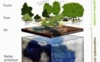 Architectes et paysagistes se préoccupent des zones humides