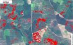 Première européenne:l'état sanitaire de la forêt landaise surveillé par télédétection