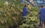 Maïsadour et Terrena visent la place de leader européen des semences