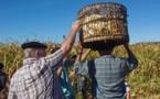 La  grande inquiétude des maïsiculteurs européens