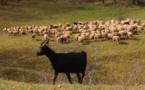 Il faut sauver les races animales menacées d'extinction